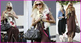 Petits chiens de Paris Hilton